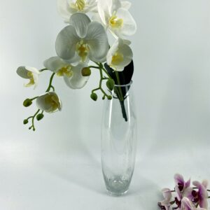 LS28 Moth Orchid 7 heads