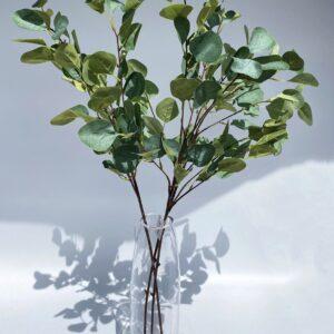 GL16 Long Eucalyptus