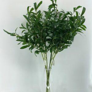 GL21 Long olive leaves