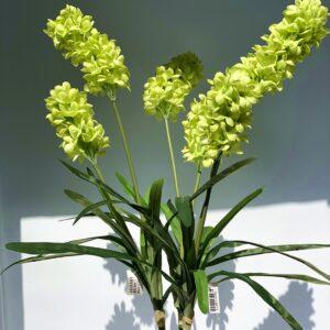 LM13 2 head hyacinths