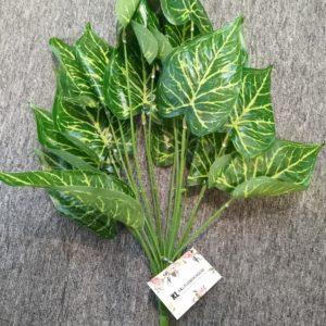 GS42 green radish (white)