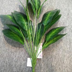 GS44 green radish