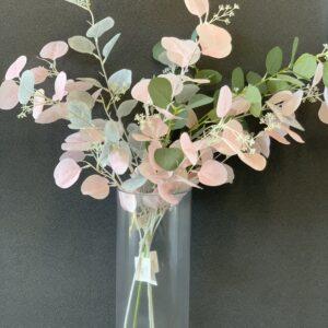 GL43Big leaf eucalyptus