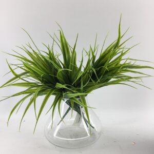 GS51: Width leaves grass