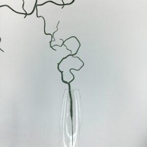 GS58: Dry vine