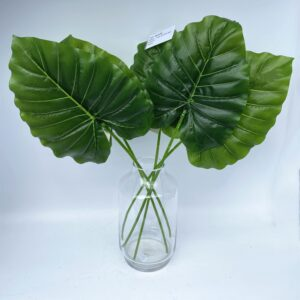 GL14A: Single wild taro leaf