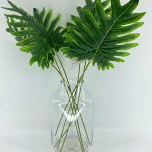 GL39: Philodendron xanadu leaf