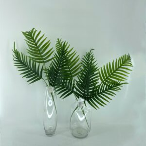 GL52: Areca palm