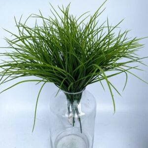 GS52: Fine leaves grass